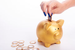 Woman's hand putting coins  Brazilian money into piggy bank Stock Image