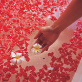 A woman's hand putting a plumeria in a bathtub Stock Photography