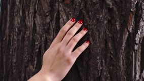 Woman's hand with red nails holding a tree stock video