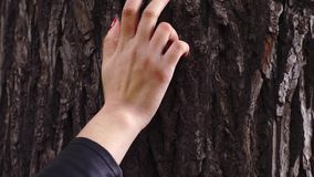 Woman's hand with red nails holding a tree stock video footage