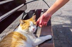 Woman& x27; s-hand som smeker en katt som ligger på gatan royaltyfria bilder