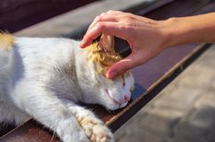Woman& x27; s-hand som smeker en katt som ligger på gatan royaltyfri fotografi