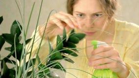 Woman`s hand spraying green plant. 4k stock video