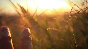 Woman's hand touch wheat ears at sunset. Blurred stock footage