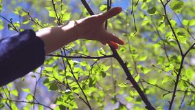 A woman`s hand touches a branch of a tree with blossoming leaves. Hands on background of green foliage and blue sky: women`s hands play with the sun, touch stock footage