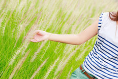 Woman's hand touching green grass Royalty Free Stock Photos