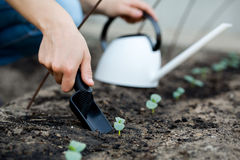 Woman's hand transplanting a small plant with shovel. Stock Images