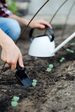 Woman's hand transplanting a small plant with shovel. Royalty Free Stock Images