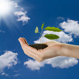Woman's hand with young plant in soil. Over blue sky background Royalty Free Stock Image