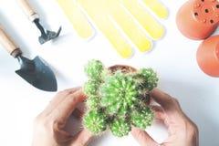 Woman& x27; s handen die een pot van cactus met tuinhulpmiddelen houden op wit Royalty-vrije Stock Afbeelding
