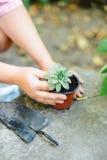 Woman& x27; s handen overplanten succulent in nieuwe pot Tuinierende ou Royalty-vrije Stock Fotografie