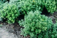 Woman& x27; s handen overplanten succulent in nieuwe pot Tuinierende ou Royalty-vrije Stock Afbeelding