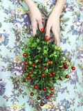 Woman's hands with bouquet of berry Royalty Free Stock Photography
