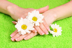 Woman's hands and flowers Royalty Free Stock Photos