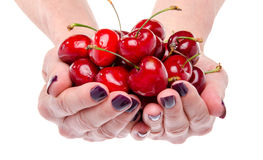 Woman's hands full of fresh cherries Stock Images