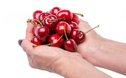 Woman's hands full of fresh cherries Royalty Free Stock Photos