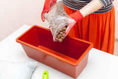 Woman`s hands in gloves pours drainage and fertilizer into a plastic container. Preparation of seeds for planting in the ground Stock Images