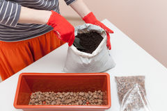 Woman`s hands in gloves pours drainage and fertilizer into a plastic container. Preparation of seeds for planting in the ground Royalty Free Stock Photo