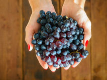 Woman's hands with grapes Royalty Free Stock Images