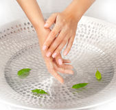 Woman's hands with green leaves. Woman's hands under the sink with water and green leaves Stock Photos