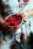 Woman`s hands holding bowl of currants, close up Stock Photos