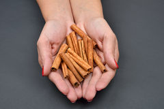 Woman's hands holding brown pods cinnamon isolated on black back Royalty Free Stock Photography