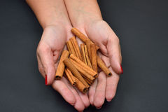 Woman's hands holding brown pods cinnamon isolated on black back Stock Images