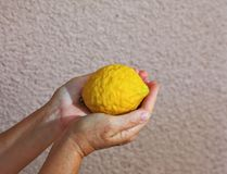 Woman`s hands holding citrus fruit Royalty Free Stock Photo