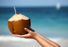Woman`s hands holding coconut Stock Photos