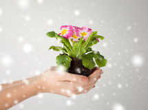 Woman's hands holding flower in soil Stock Photos