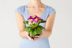 Woman's hands holding flower in soil Stock Photo