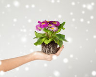 Woman's hands holding flower in soil Stock Images
