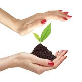 Woman's hands are holding green plant on white Stock Photos