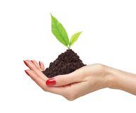 Woman's hands are holding green plant on white background close- Royalty Free Stock Photos