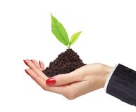 Woman's hands are holding green plant on white background Stock Images