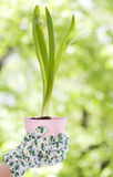 Woman's hands holding a hyacinth Stock Photos