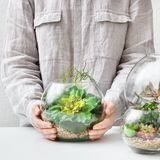 Mini florarium in woman`s hands. Home gardening hobby concept. Woman`s hands holding mini succulent garden in glass florarium vase. Home gardening hobby concept royalty free stock photos