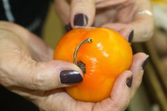 Woman`s hands holding an orange hot pepper and feeling it to see if it is any good with blurred background. A Woman`s hands holding an orange hot pepper and Royalty Free Stock Images