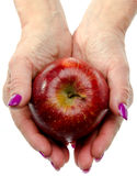 Woman's hands holding a red apple Royalty Free Stock Images