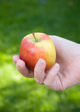 Woman's hands holding a ripe apple Royalty Free Stock Images