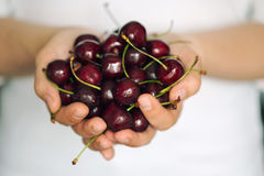 Woman's hands holding ripe cherries Royalty Free Stock Image