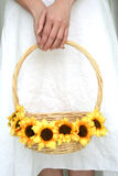 Woman's hands holding sunflower. Woman's hands holding a basket of sunflower stock photo