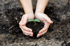 Woman's hands  holding young plant. Ecology concept Stock Photo