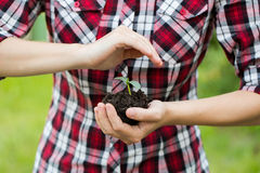 Woman's hands  holding young plant. Ecology concept Royalty Free Stock Photo