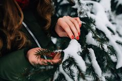 Woman`s hands holds snow-covered tree branch. In winter forest Stock Photography