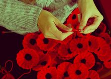 Woman`s Hands Knitting Poppies B for Charity Stock Images