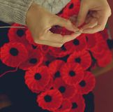 Woman`s Hands Knitting Poppies C for Charity Royalty Free Stock Photography