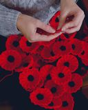 Woman`s Hands Knitting Poppies A for Charity Royalty Free Stock Photography