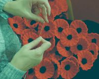 Woman`s Hands Knitting Poppies D for Charity Stock Images