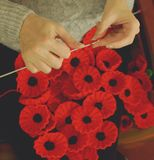 Woman`s Hands Knitting Poppies E for Charity Stock Photos